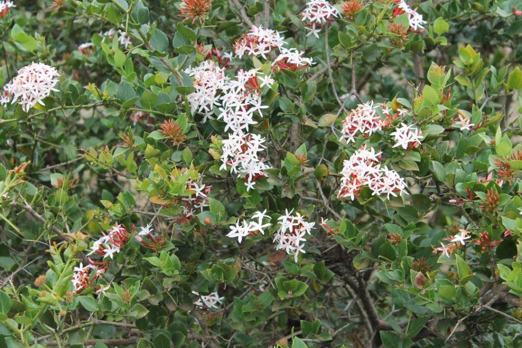 Ngong wild flowers